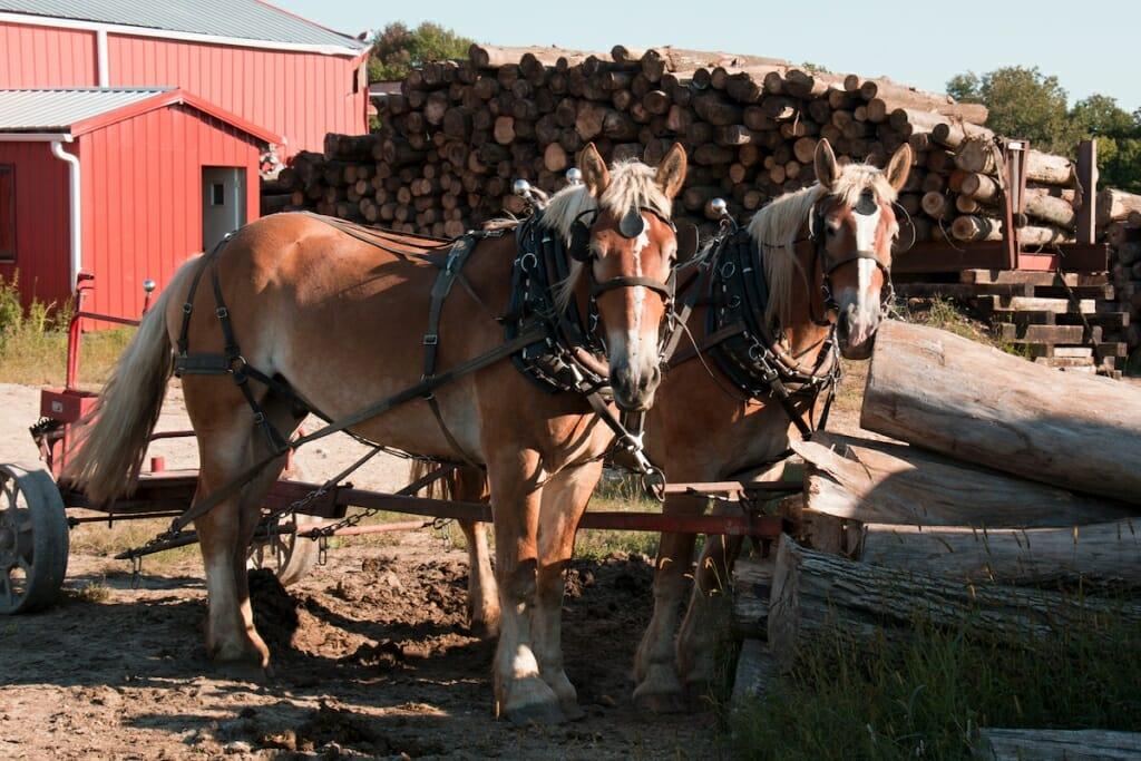 Photo: A team of horses on a farm field.