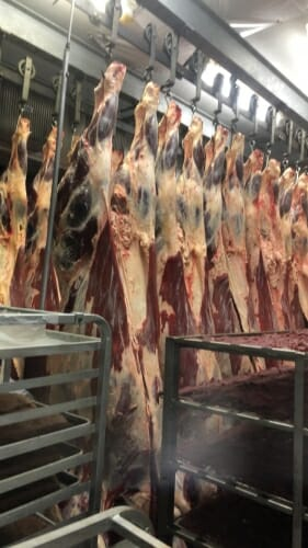 Photo: Some meat hanging from hooks