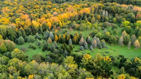 Photo: An aerial view of a garden with pine trees.