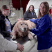 Photo: Scout on examining table surrounded by veterinary team in front of TomoTherapy machine