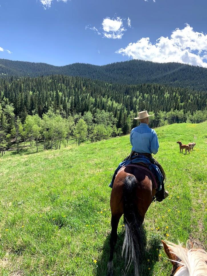 A man rides a horse on a green hillside.