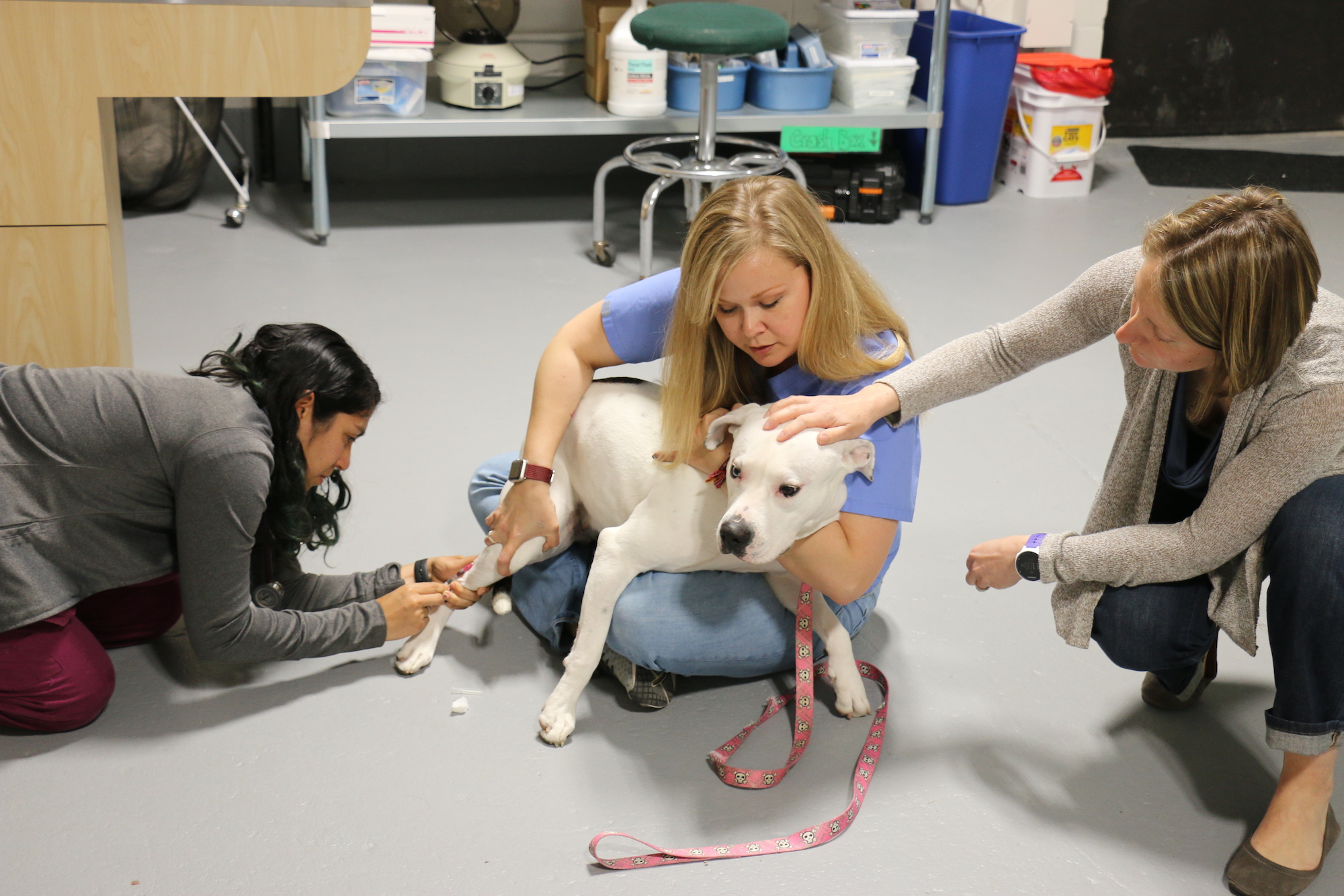 Photo of a veterinary technician holding a white terrier while a veterinary student provides treatment and a veterinarian pats the dog.