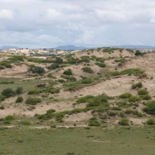 Neighboring dunes in the Otindag dune field in northern China can remain stable in what appear to be opposing states — bare and active sand or stabilized by plant cover — due to subtle, hyper-local differences.