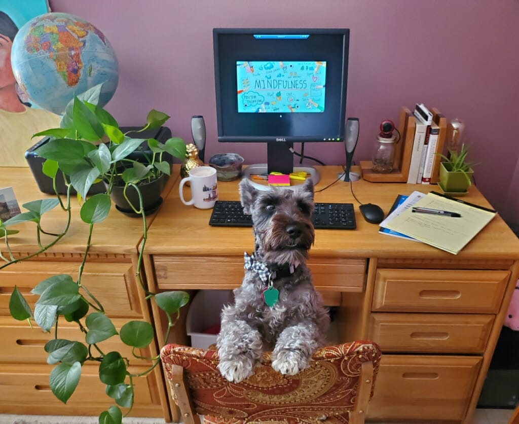 Desk with globe, plant, computer and books, with dog sitting in chair
