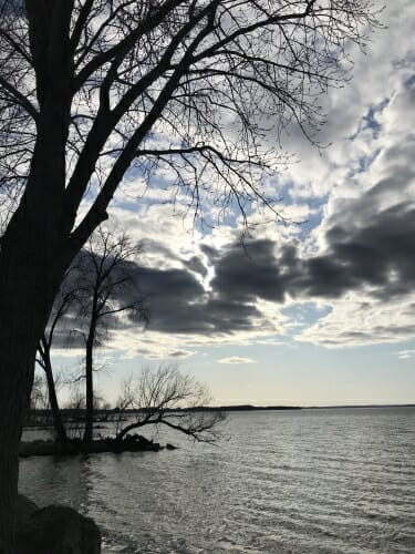 Lake and tree under cloudy sky