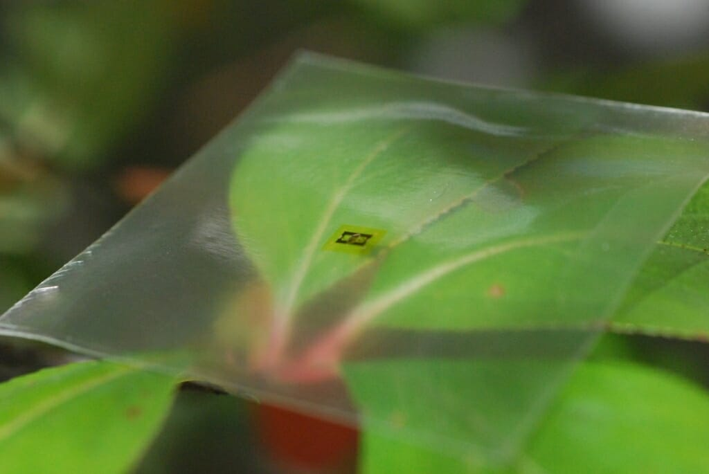 Tiny microwave chip on a clear piece of material resting on a leaf