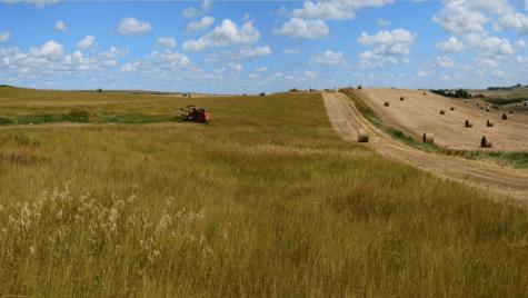 Grassland field