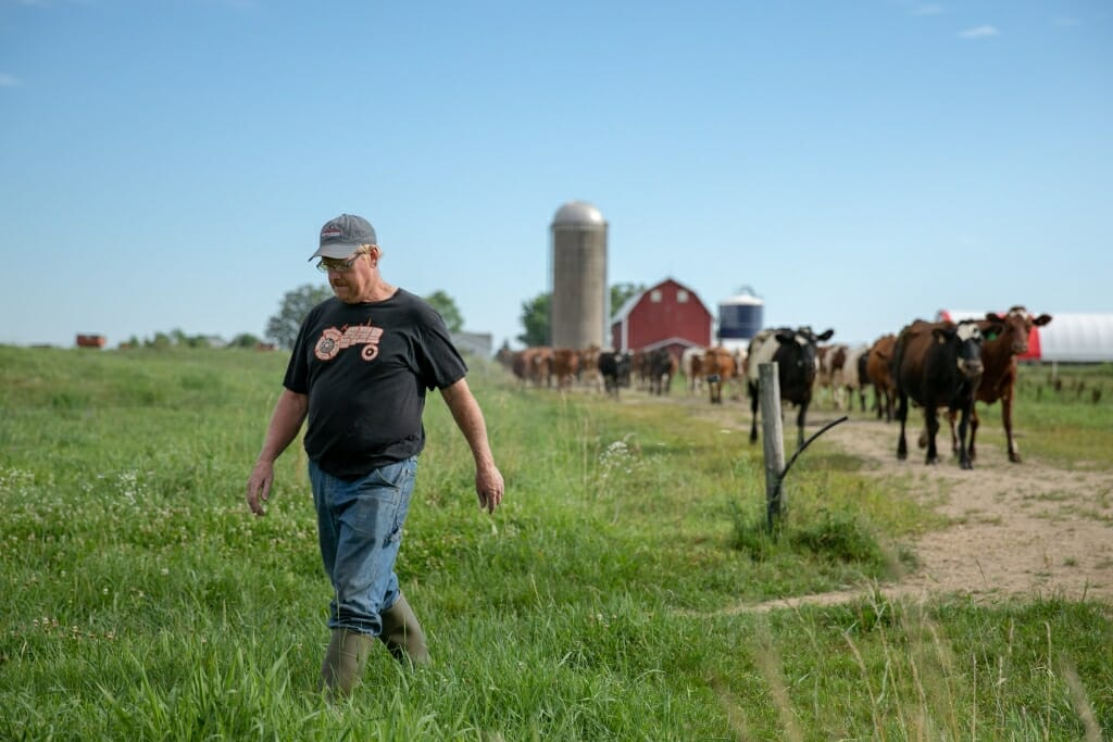 Bert walking into field with cows following from barn