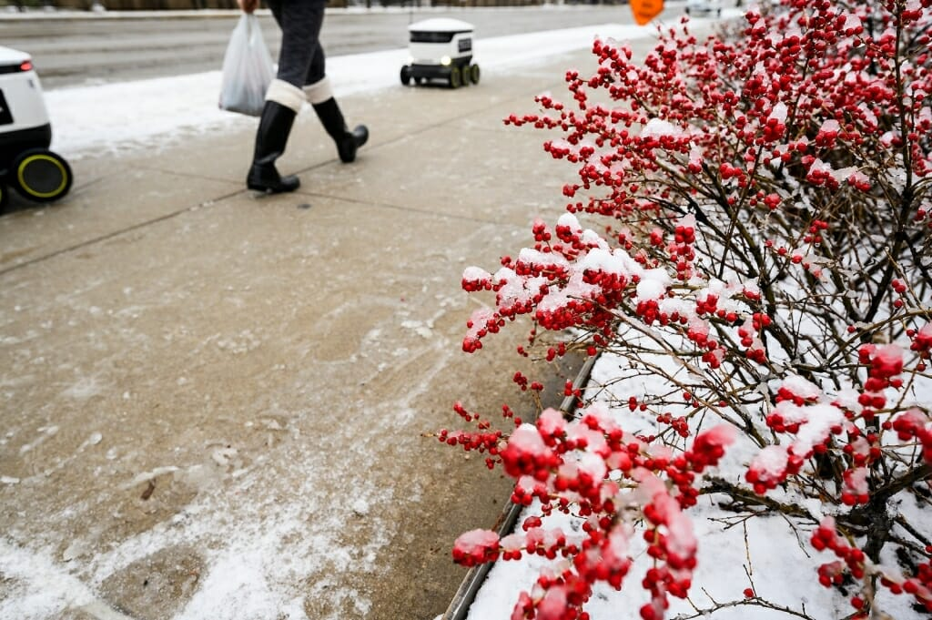 A red-berry bush frames a view of pedestrians – and the occasional food-delivery robot – making their way along a University Avenue sidewalk.