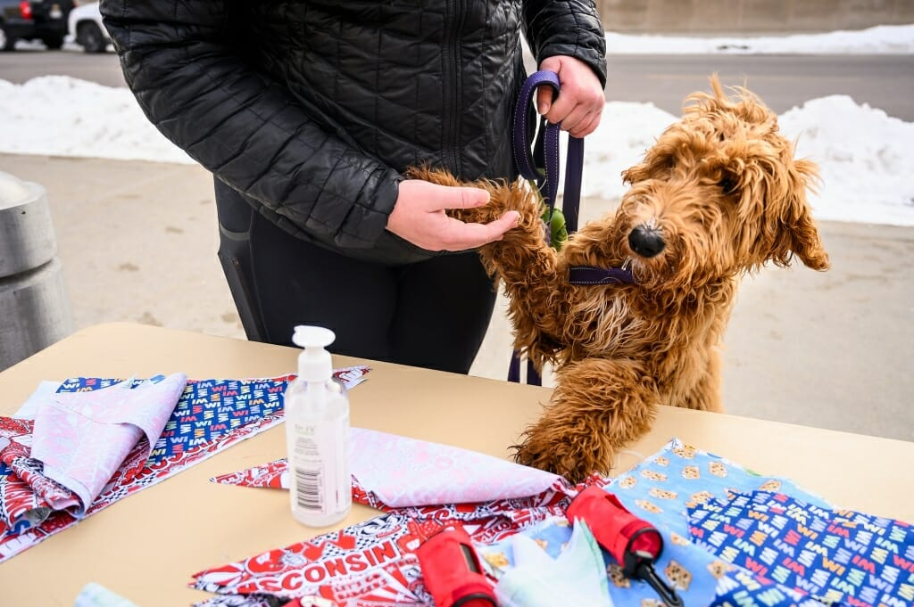 Lauren Sargeant's excited six-month-old golden doodle, Ellie, explores the welcome table.