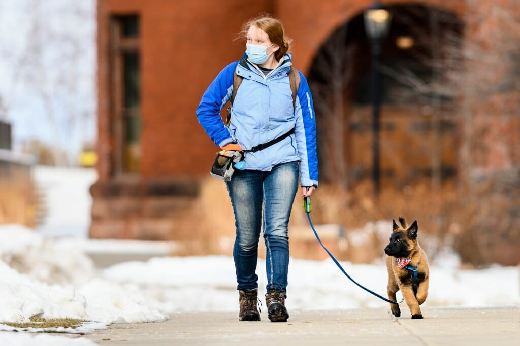 Laura Simonson, an associate research specialist in UW-Madison's School of Medicine and Public Health's Department of Dermatology, walks her 12-week old Belgian Tervuren, named Eager, through Library Mall.