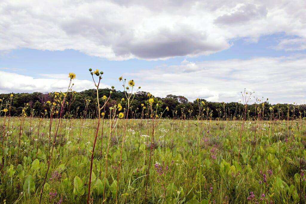 Greene Prairie