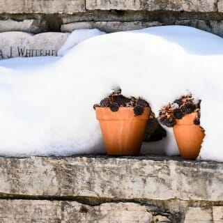 Allen Centennial Garden: Potted succulent plants lay under a blanket of snow in the Moira J. Whitehead MD Italian Garden.