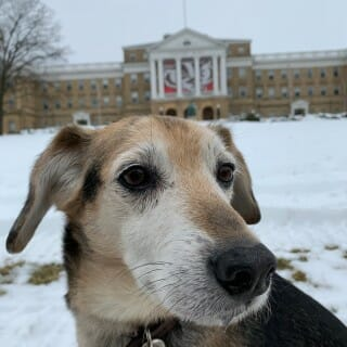 Chester at Bascom Hall.