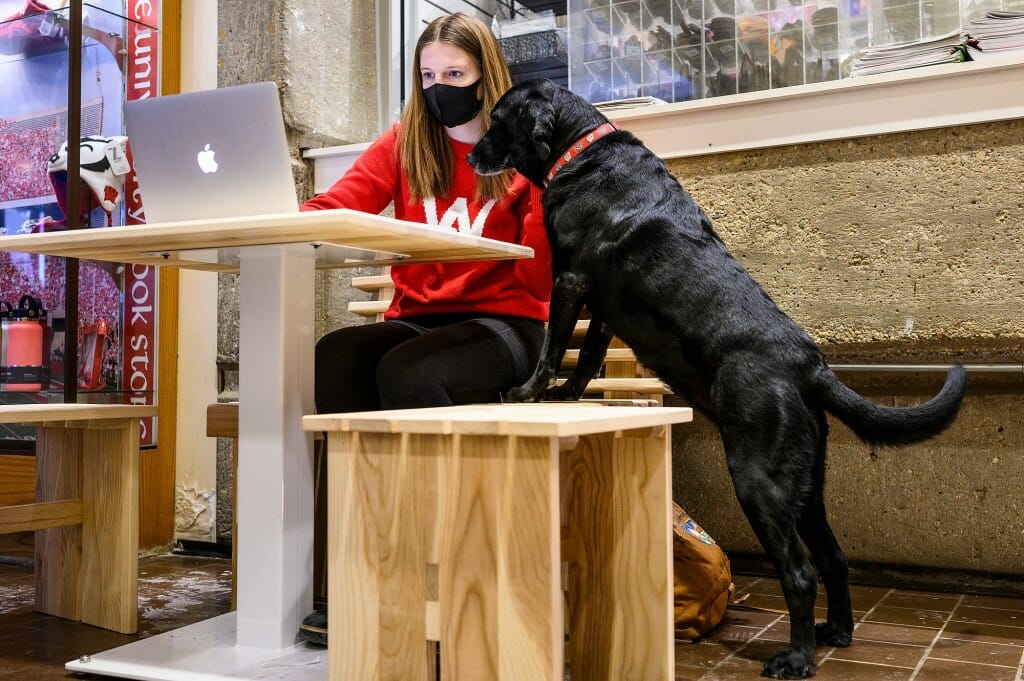 Dog leaning on bench next to student sitting at table