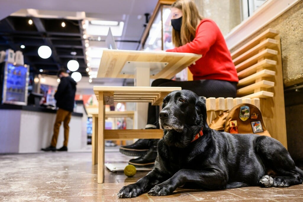 Dog lying on floor next to student sitting at table