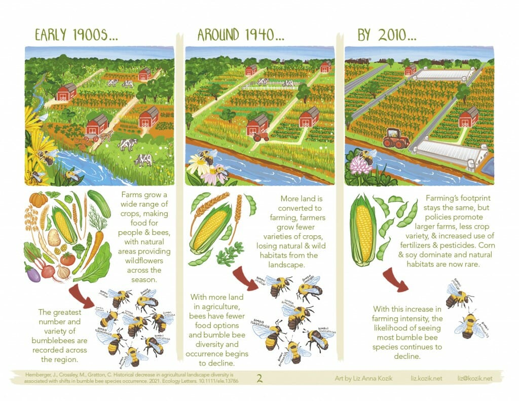 Midwest bumble bees declined with more farmed land, less diverse crops since 1870