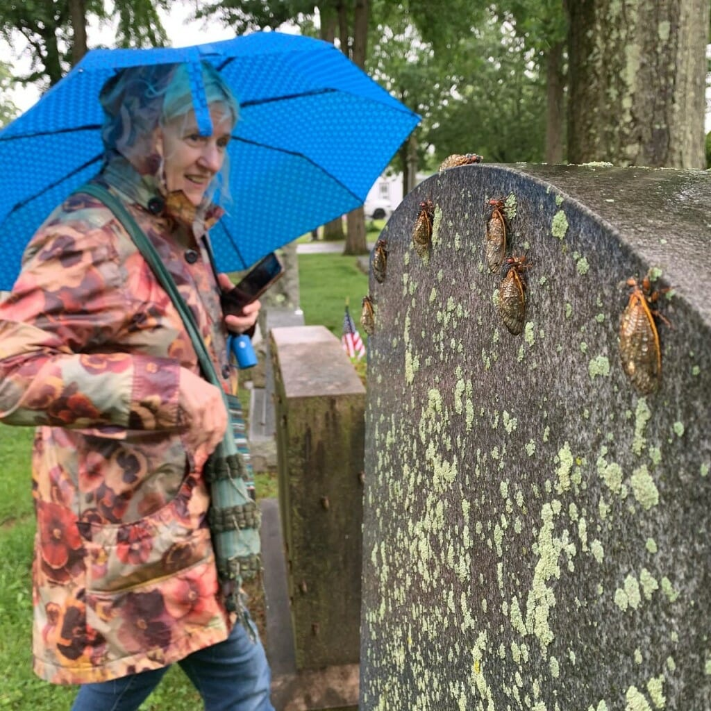 Jennifer Angus holding an umbrella and looking at cicadas on a tombstone