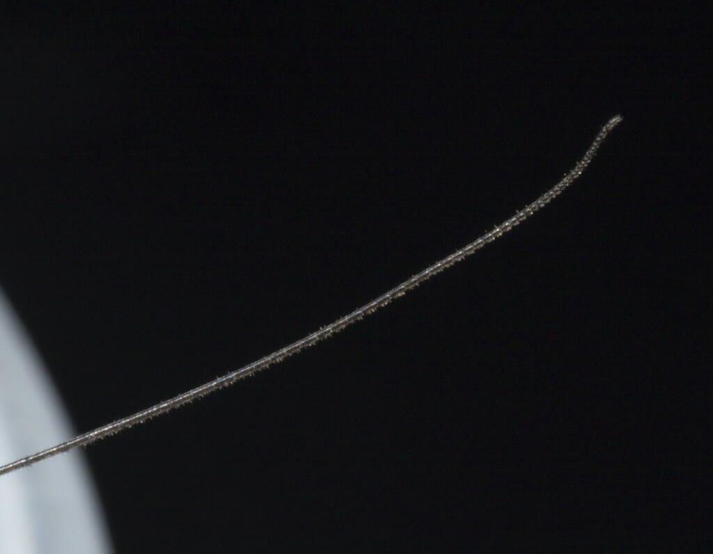 Extreme closeup of a daddy longlegs leg