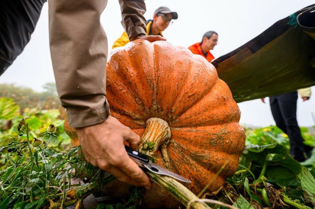 Closeup of a pumpkin