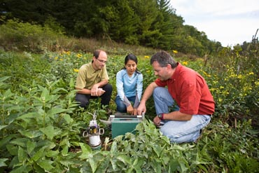 essay on natural vegetation