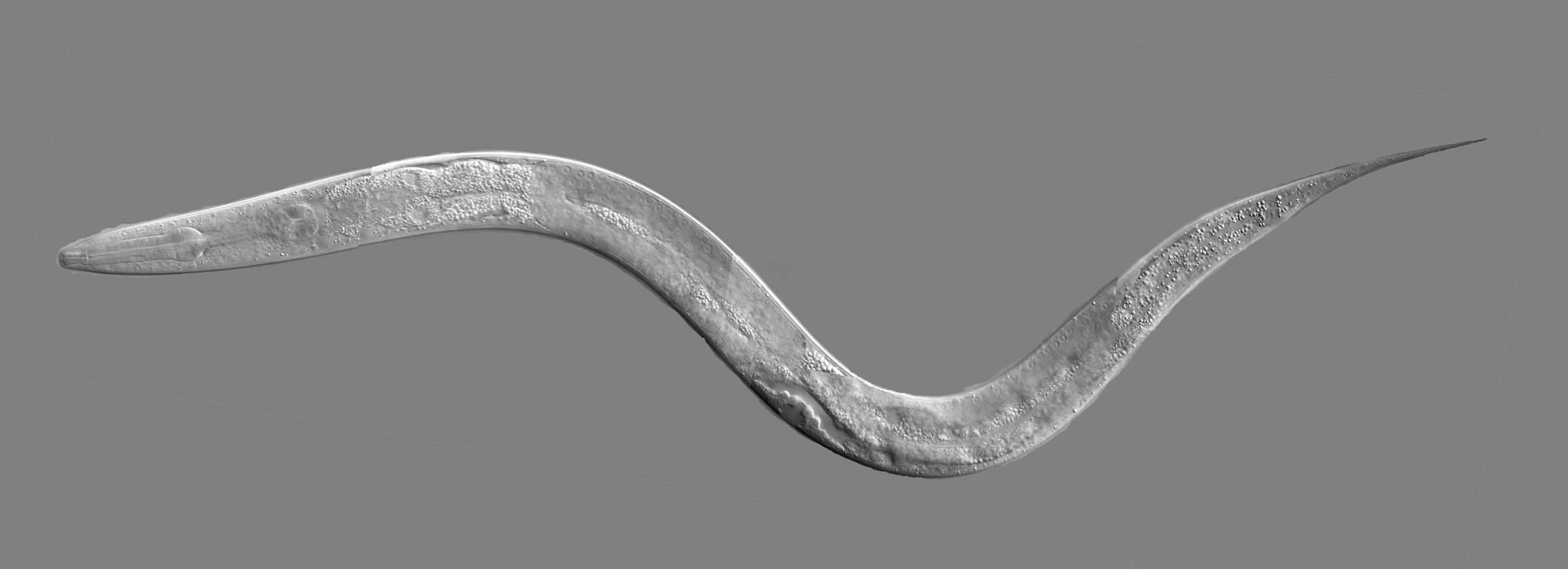 c-dates kosten Worms