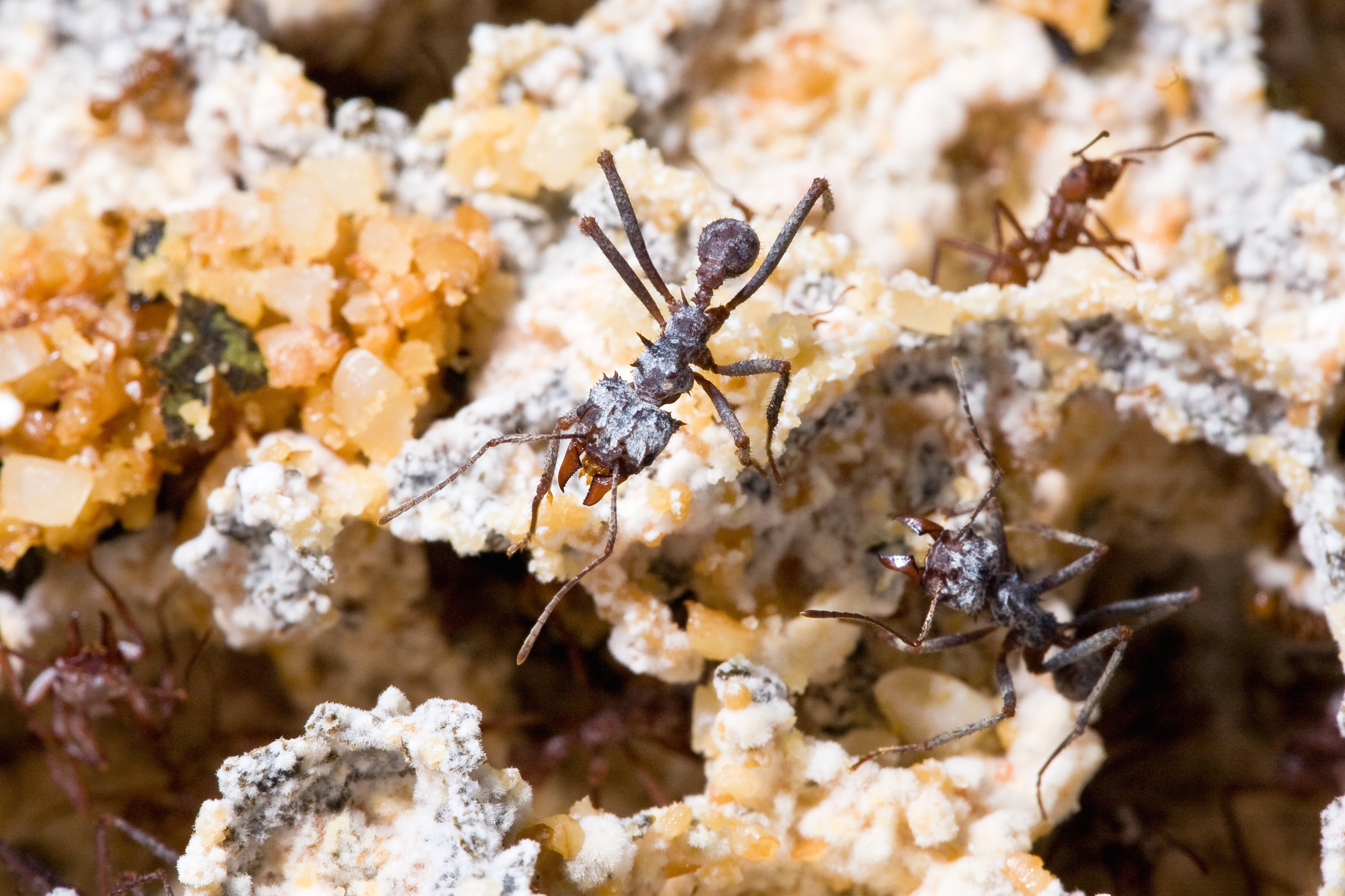 leaf cutter ants and fungus relationship quizzes