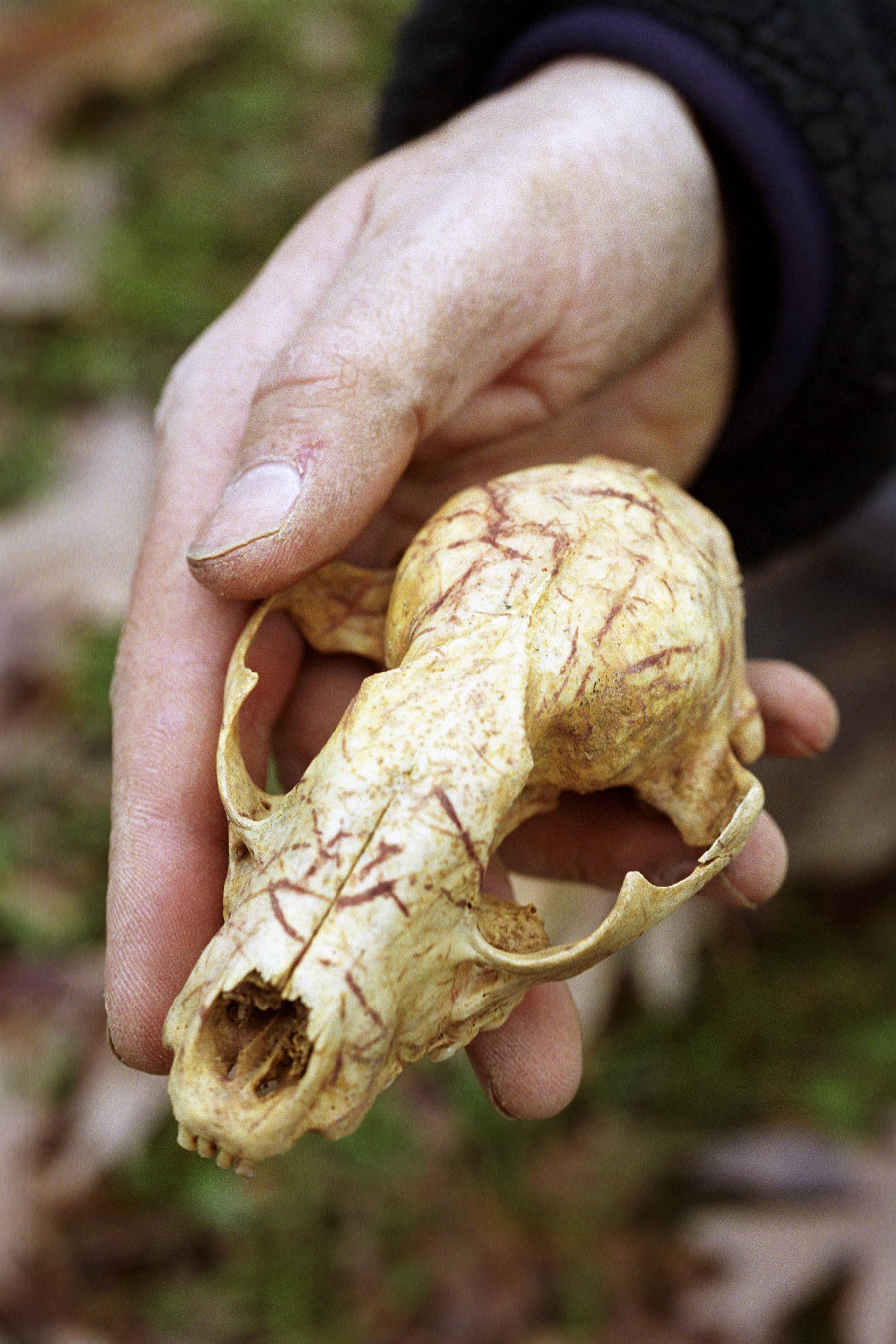 Critter skull ID.