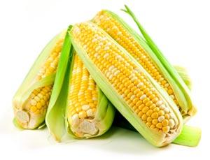 Препараты для лечения редких заболеваний могут быть получены при помощи кукурузы