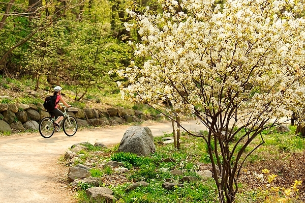 Photo: A bicyclist pedals along the Howard Temin Lakeshore Path.
