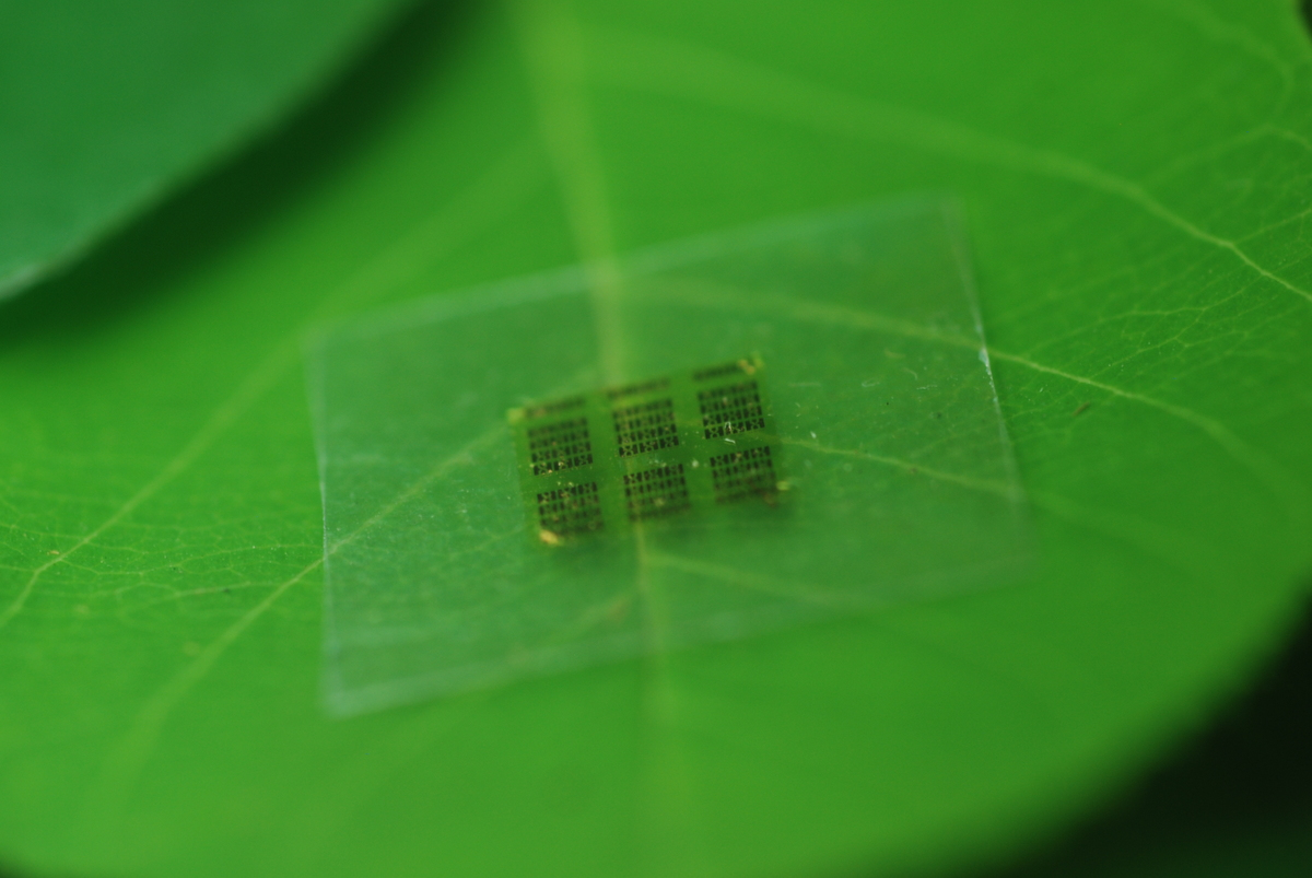 A cellulose nanofibril (CNF) computer chip rests on a leaf