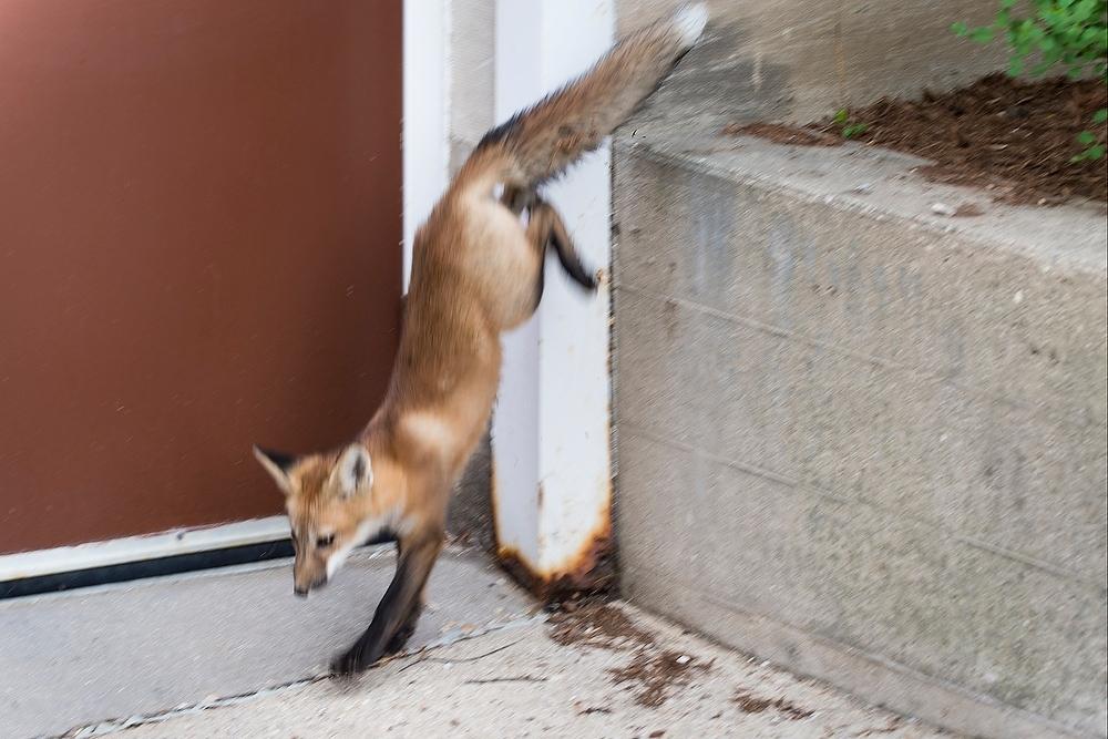 Photo: Fox