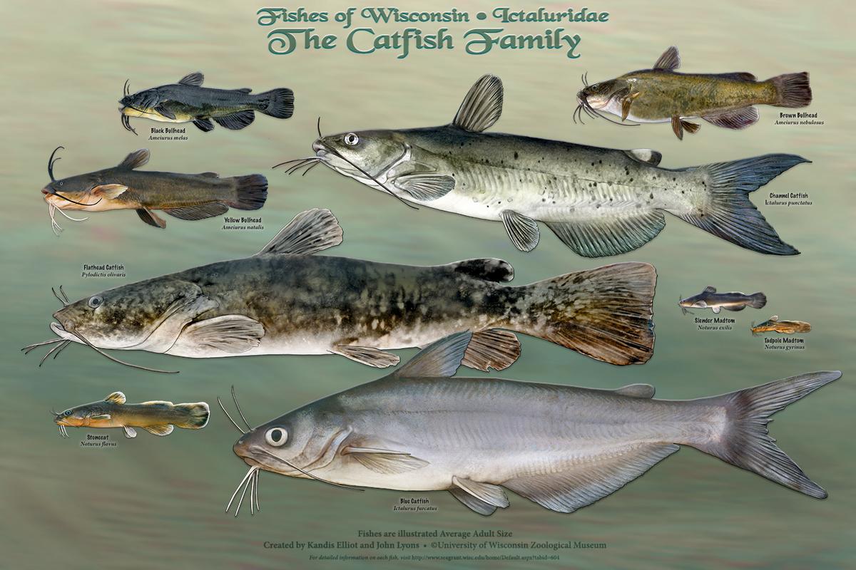 Image: Catfish poster