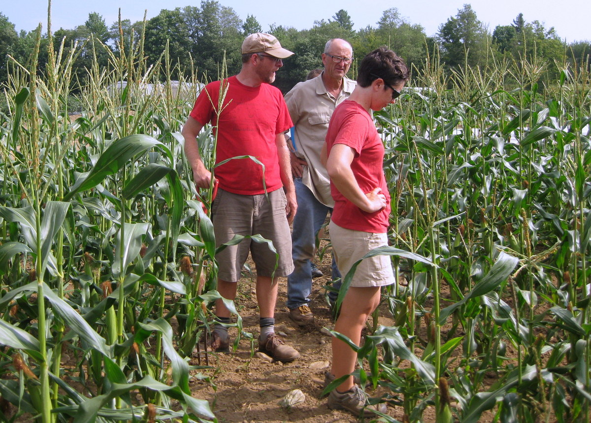 Photo: Tom Stearns, Bill Tracy and Adrienne Shelton in the field looking at sweet corn varieties.