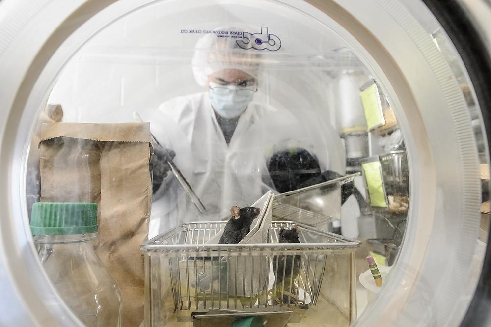 Photo: Germ-free mice