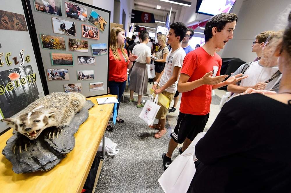 Photo: A taxidermic badger is on display as members of the UW–Madison Student Chapter of The Wildlife Society speak with students