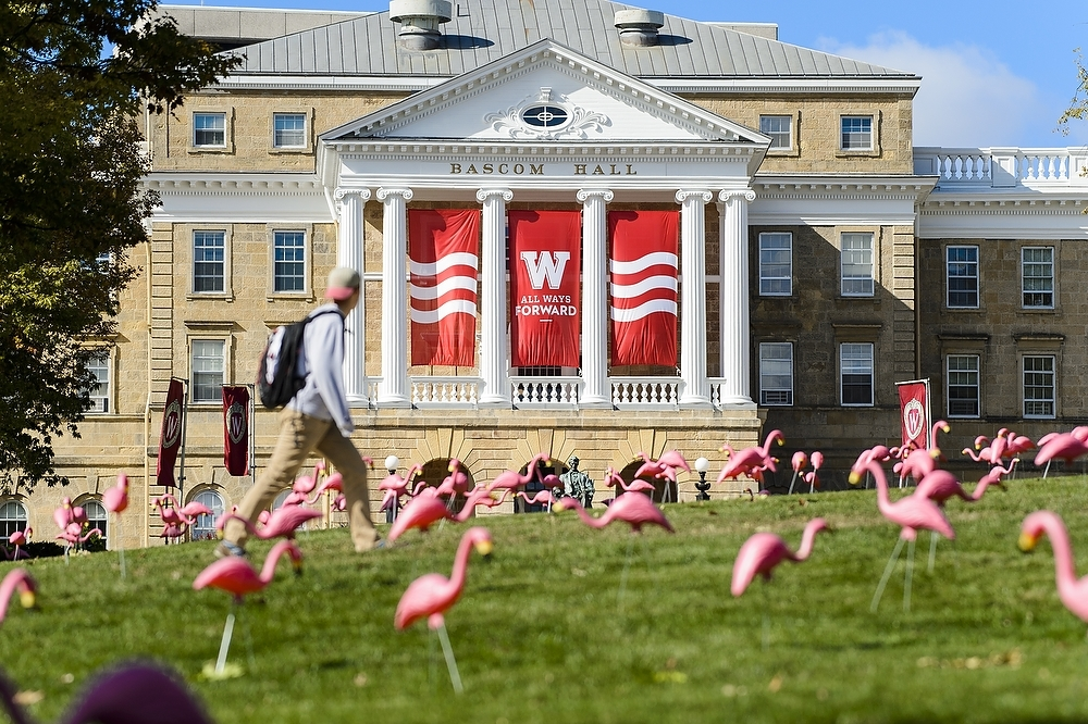 Photo: Student walking past plastic flamingos in front of Bascom Hill