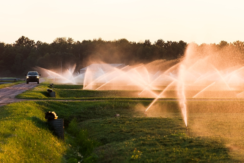 Photo: Irrigation system watering cranberry marsh