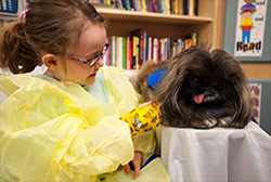 Photo of a young girl in a medical gown with a Pekingese dog.