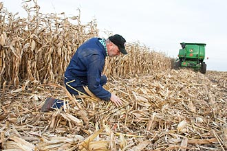 Photo of Kevin Shinners examining a corn field.