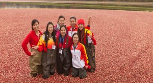Photo: Chinese Champions in cranberry bog