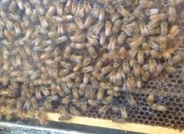 Photo: Bee hive