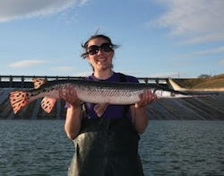 Photo: Brenda Pracheil with longnose gar