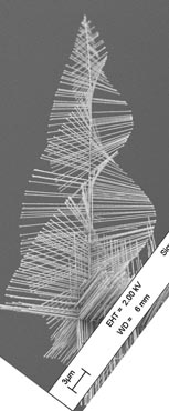 "Image of nano ""pine trees"""