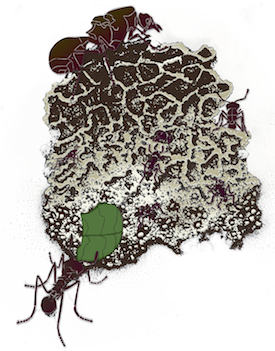 Illustration: Leaf-cutter ants