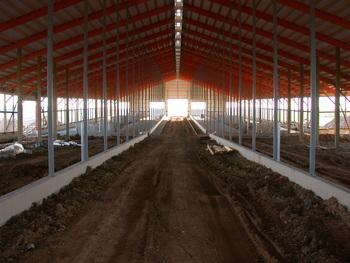 Photo: interior of dairy barn