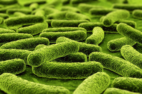 Photo: tuberculosis bacteria