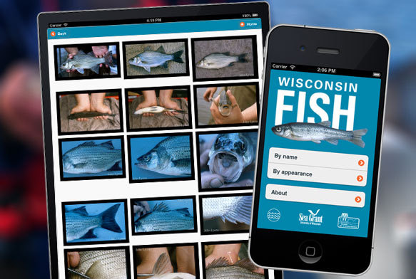 Photo: Fish identifier app on cell phone