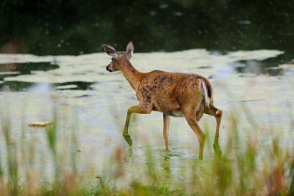 Photo: Deer