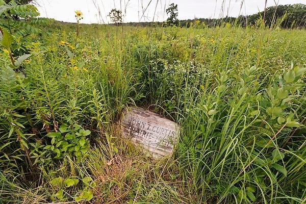 Photo: Prairie plants